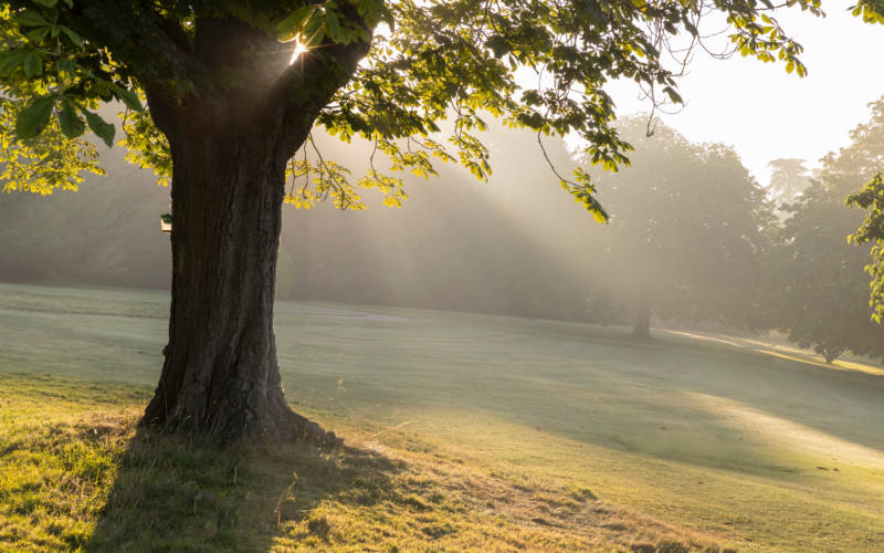 Tree-dawn-chris-lacey-3000x1875