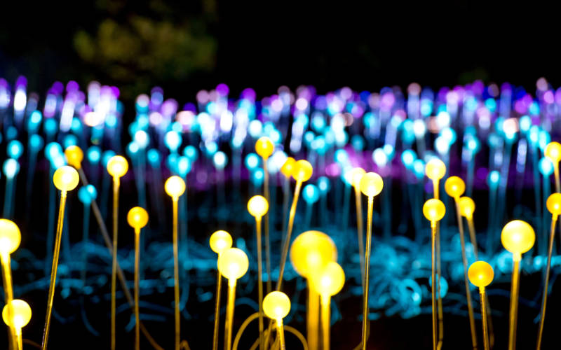 Field of Light 2016 in the Aviary Glade