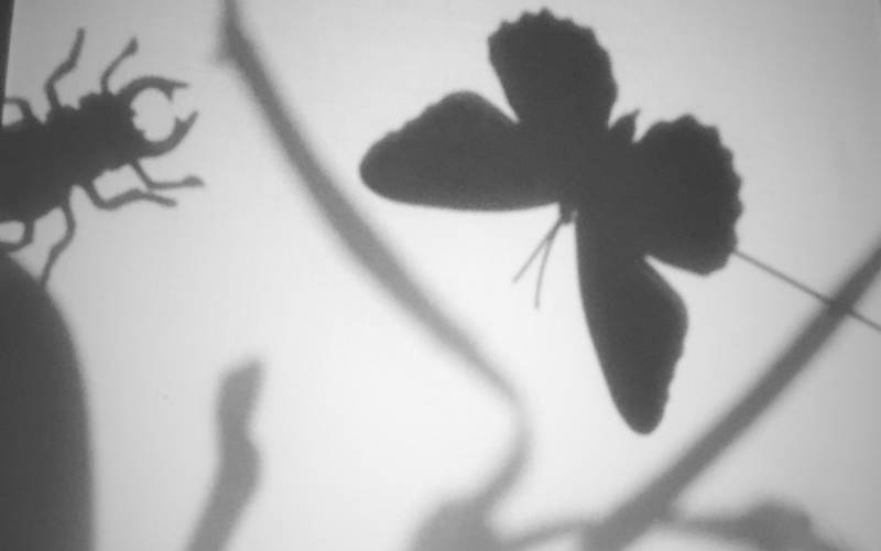 Silhouette of butterfly and beetle to represent a shadow puppet performance that will be on in March as part of Hygge