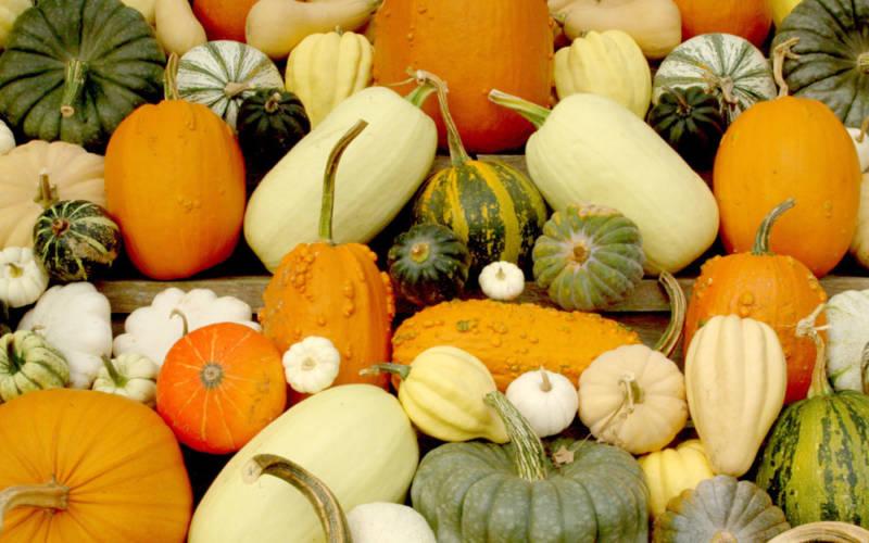 Eythrope gourds