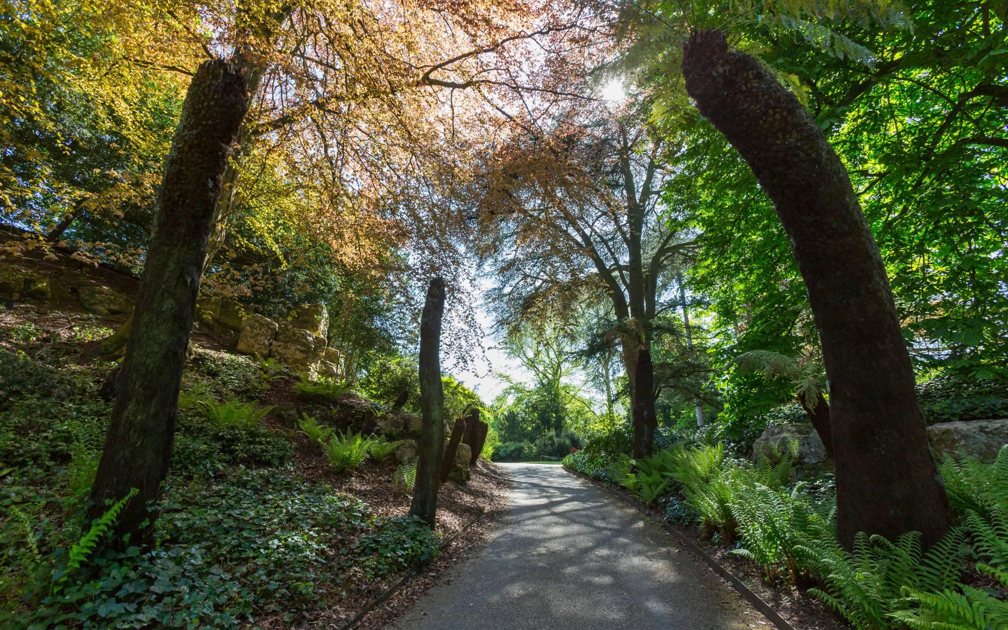 Tree ferns at Waddesdon Manor