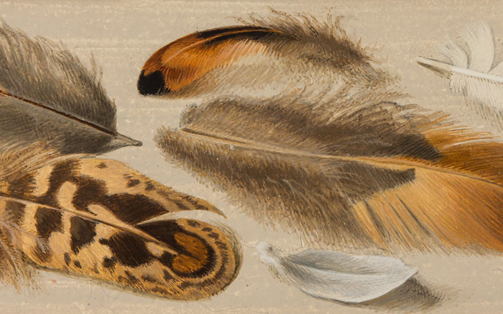 Painting of feathers
