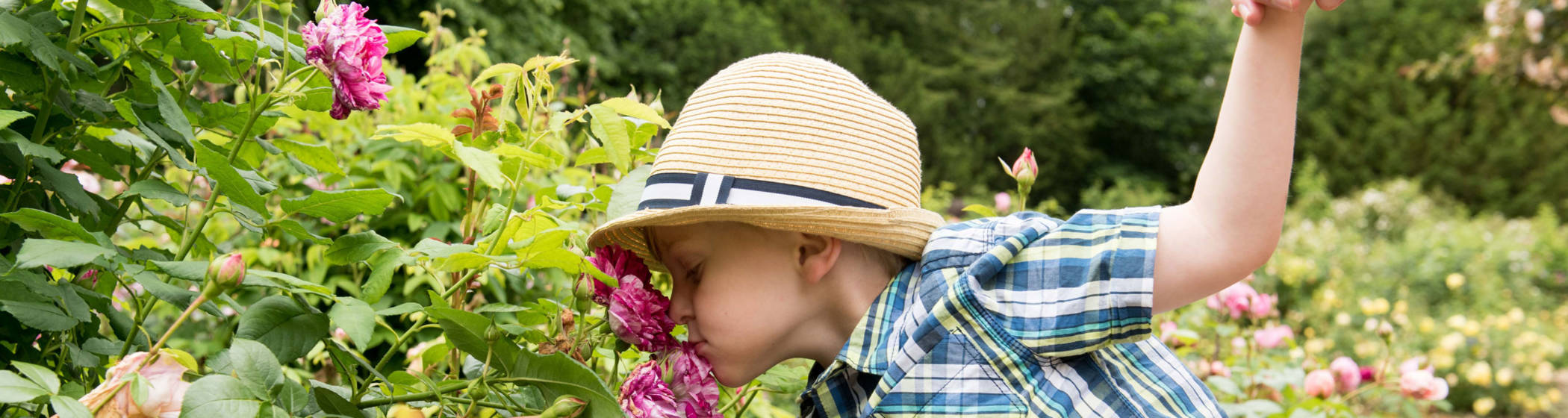 Boy smelling the roses