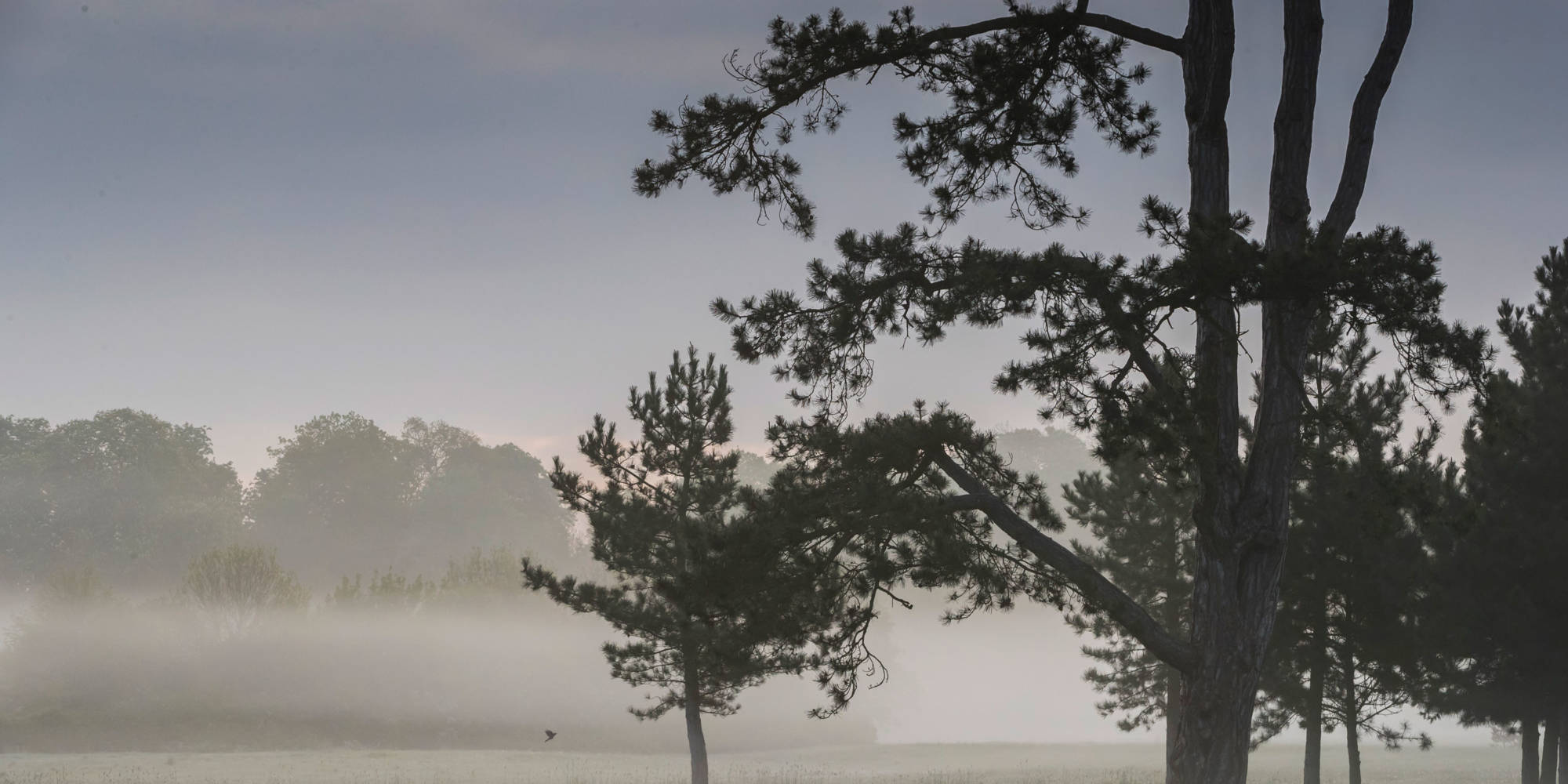 Misty trees and parkland