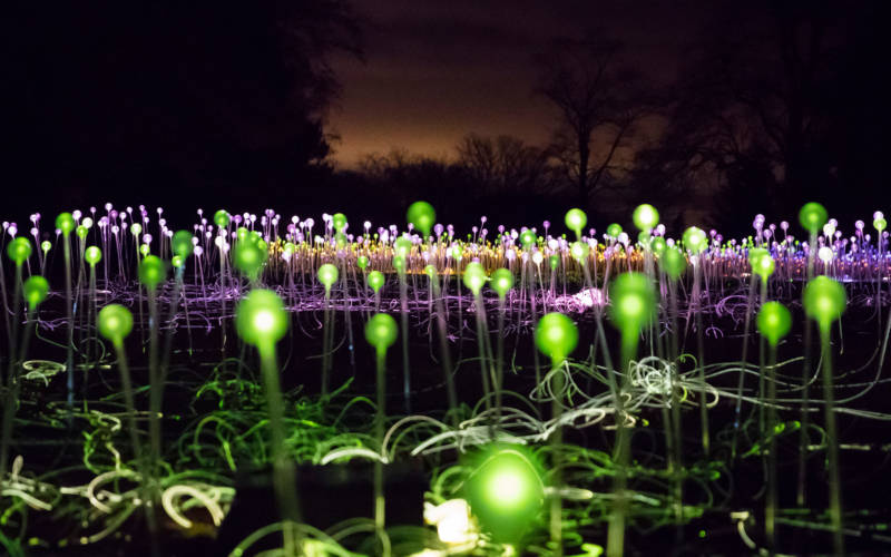 Bruce Munro's Field of Light display in the Aviary Glade