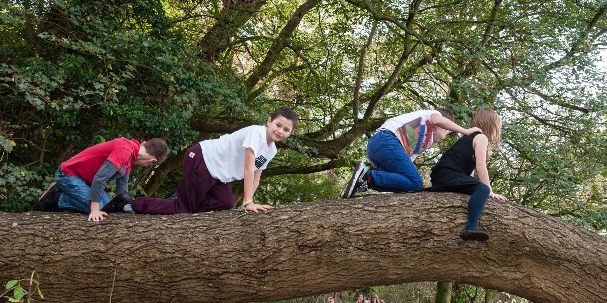 Children climbing Waddesdon trees on an autumn day
