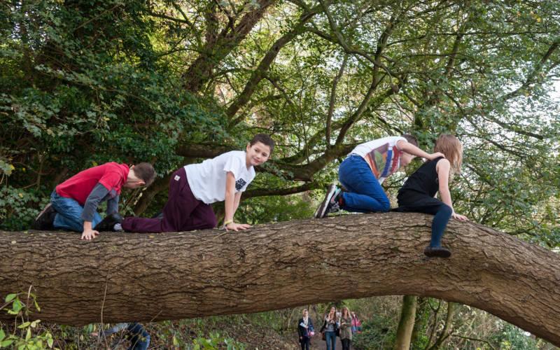 kids-climbing-trees-autumn-bebb-3000-1875