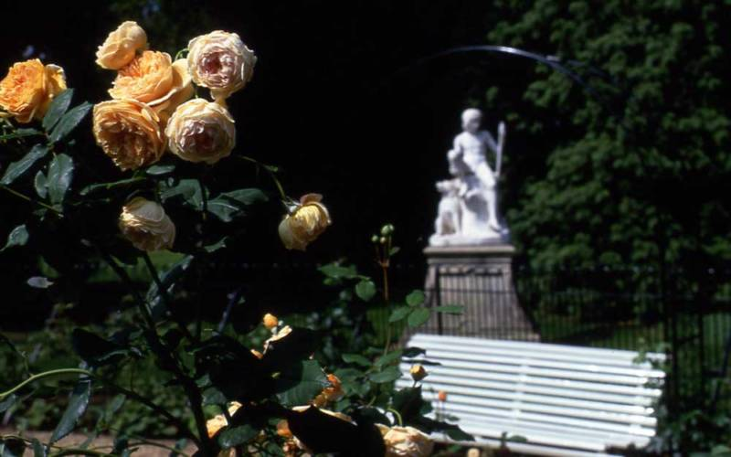 Rose Garden with statue