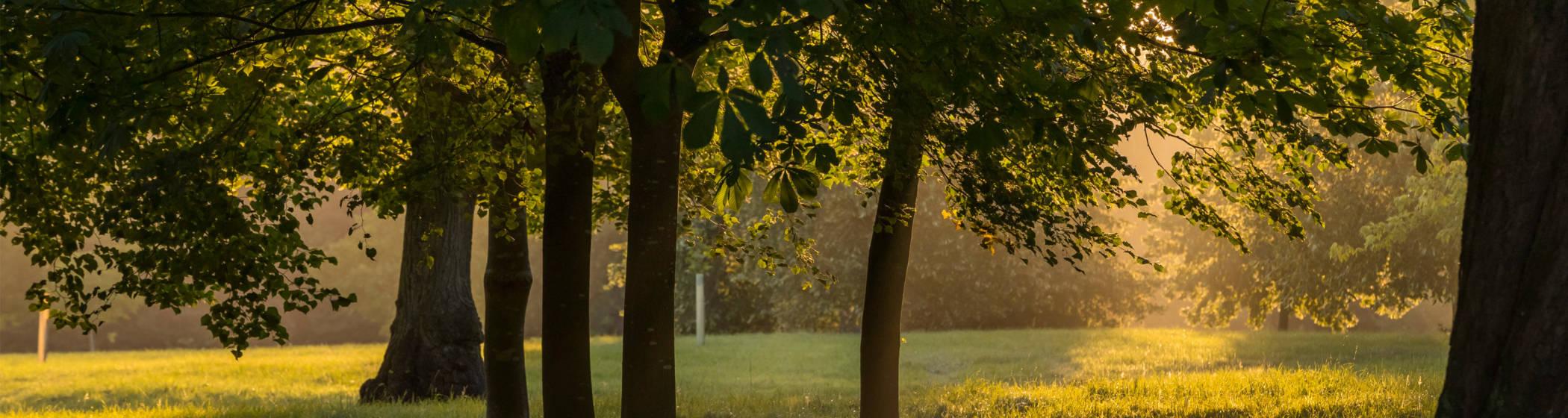 woods estate trees