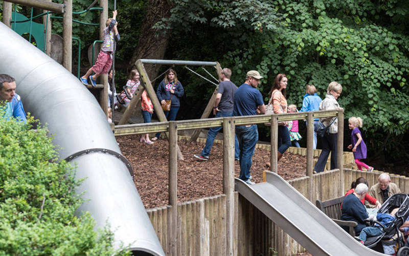 children enjoying the woodland playground