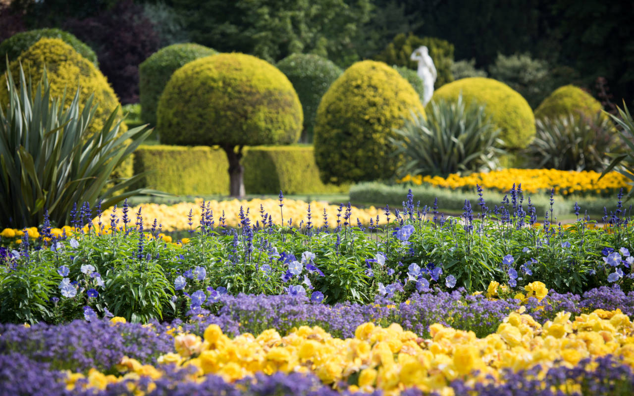 Spring flowers on the parterre