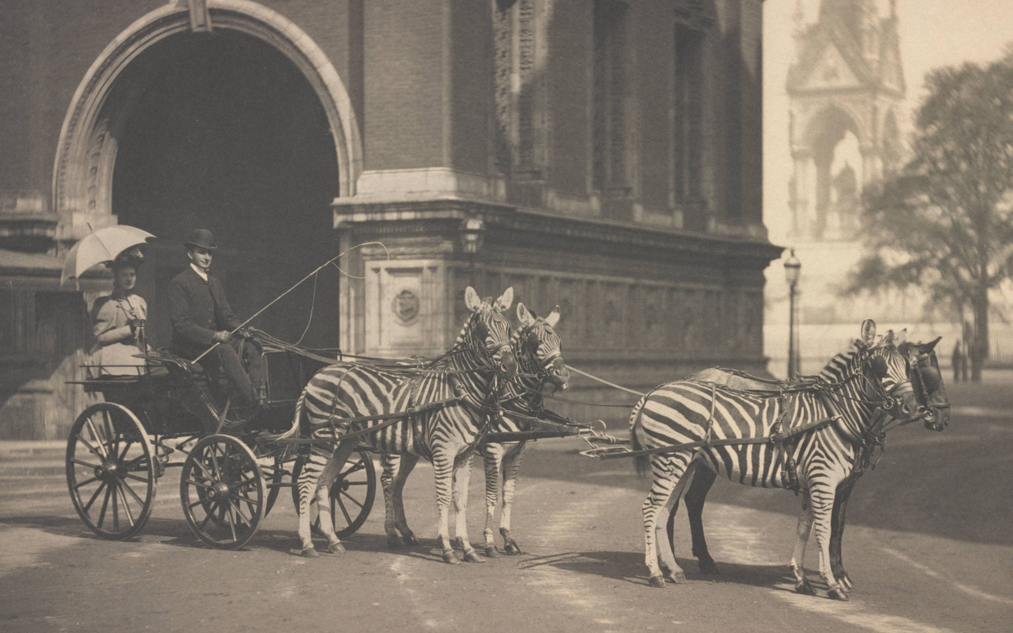 Walter Rothschild with zebras drawing his carriage