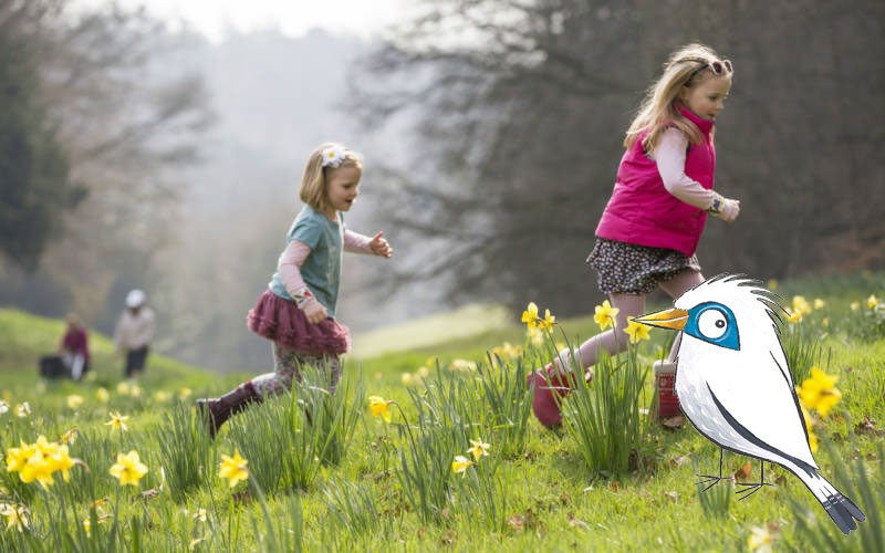 NT-children-running-through-daffodils-Chris-Lacey-3000-1875-800x500withmimi