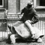 Zoology and zebras: Walter Rothschild and his museum