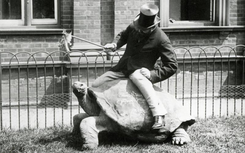 Walter-on-tortoise_3000x1875