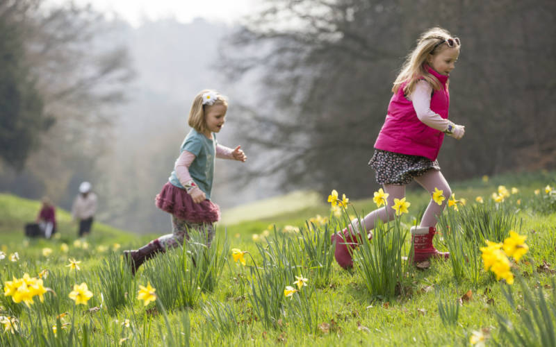Children running through the daffodils