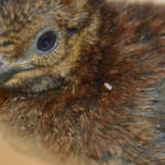 New arrival in the Aviary