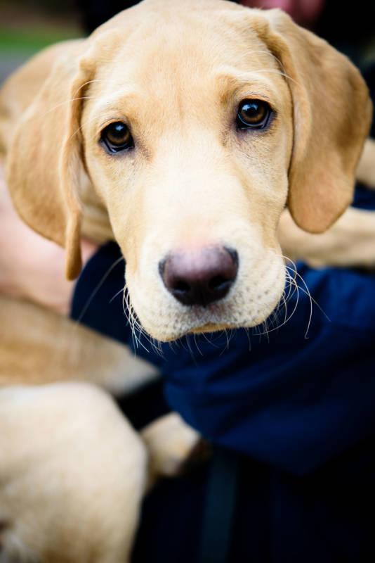 Bringing your dog to Waddesdon