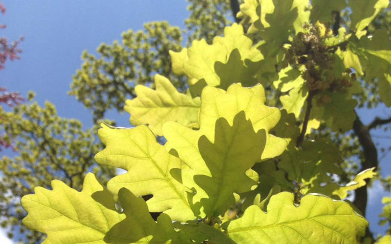 feast-2017-anna-whetstone-oak-leaves-1000-600