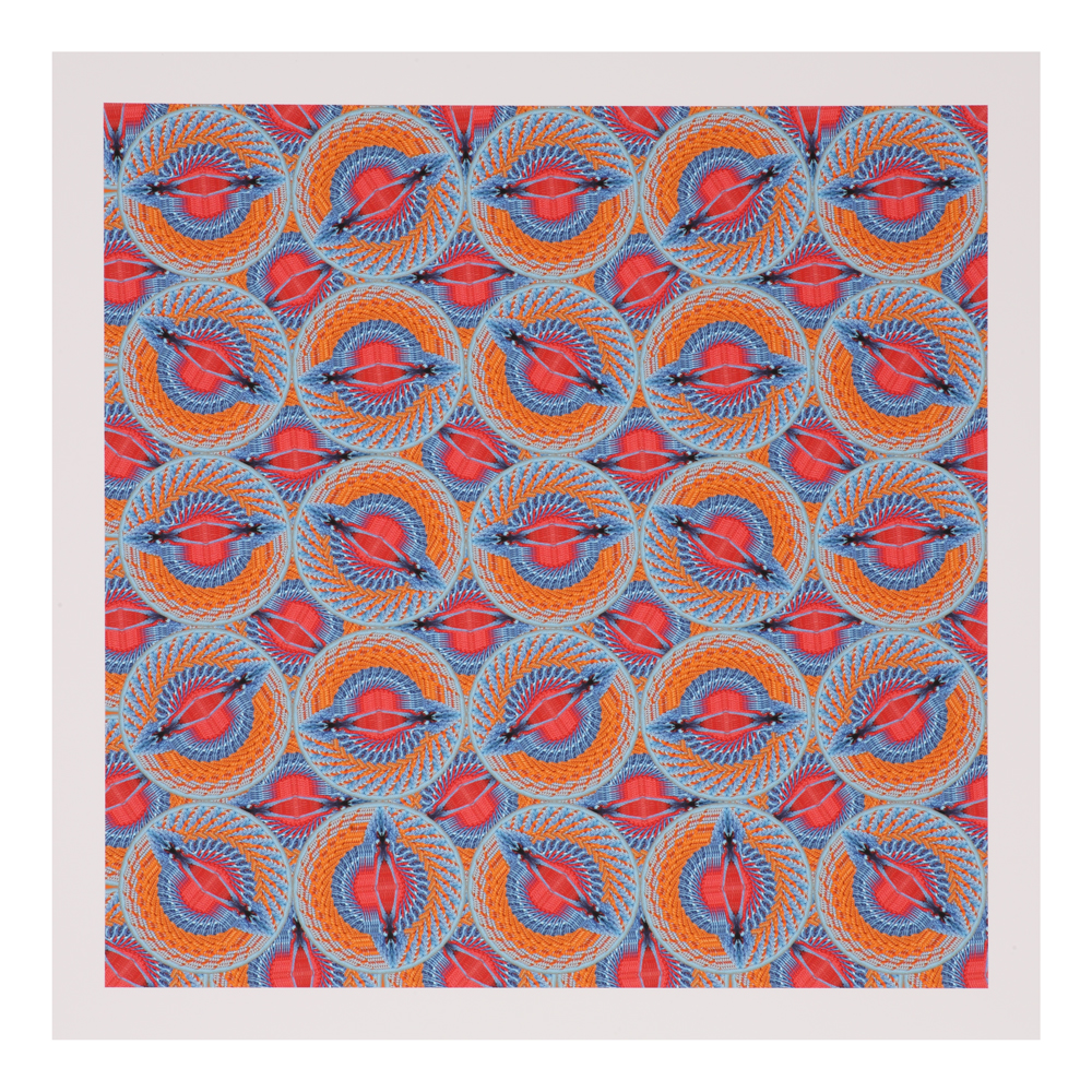 shop-gifts-creatures-creations-casuarius-rothschildi-platon-h-print-1000-1000