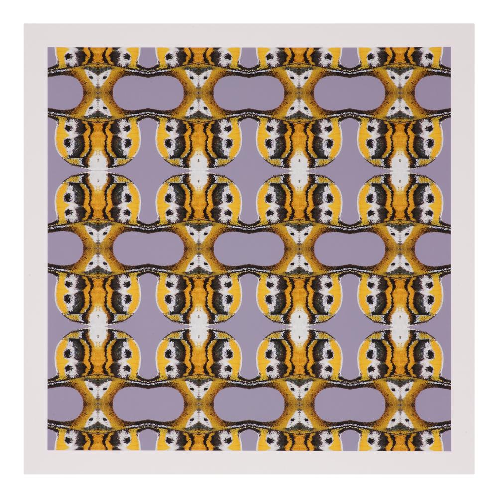 shop-gifts-creatures-creations-polyura-eudamippus-rothschildi-platon-h-print-1000-1000