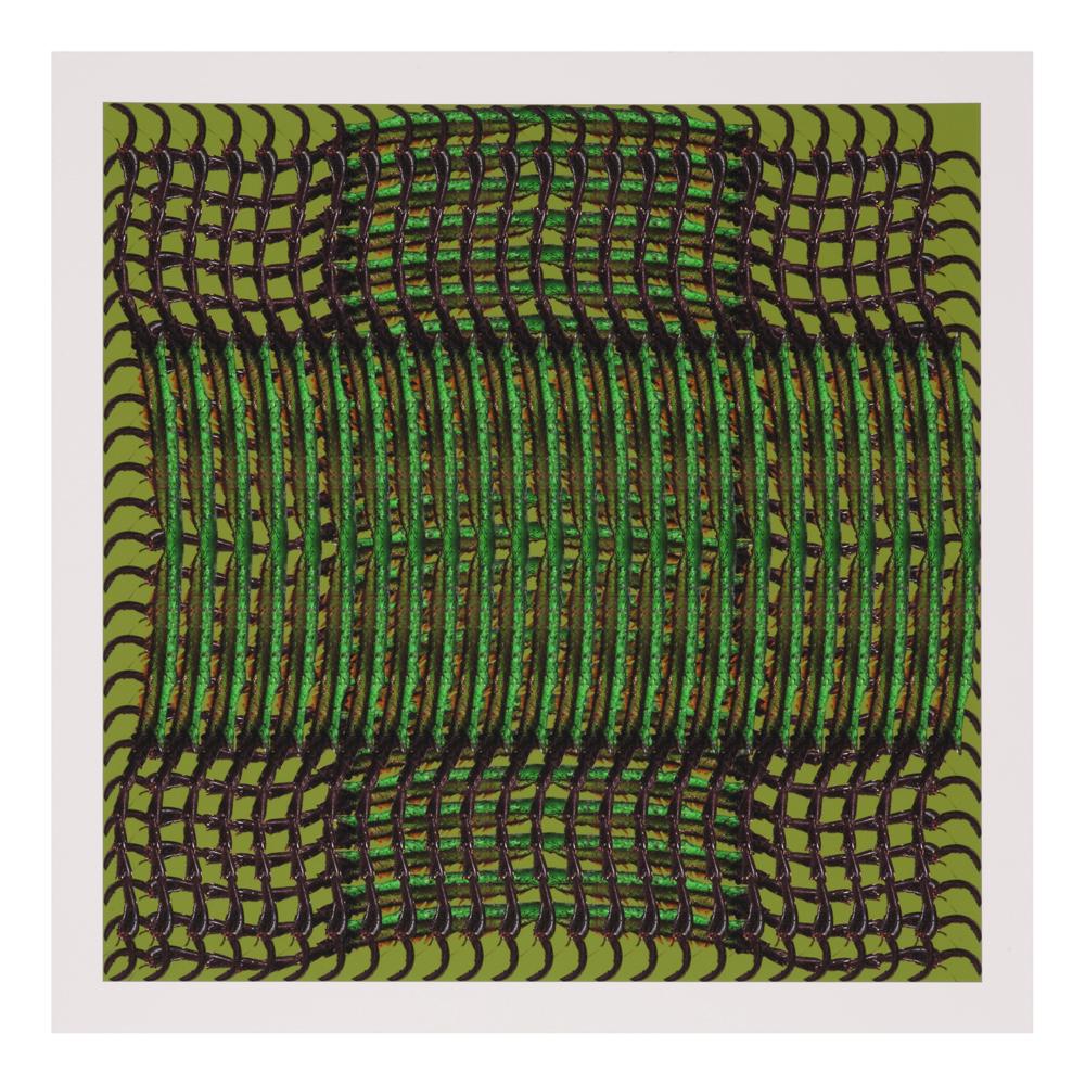 shop-gifts-creatures-creations-trigonophorus-rothschildi-platon-h-print-1000-1000