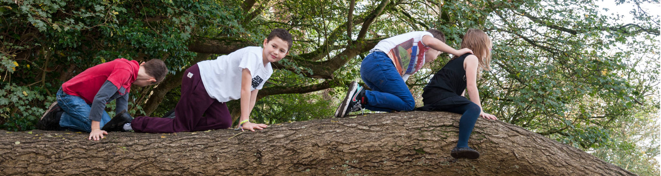 Children climibing on a tree