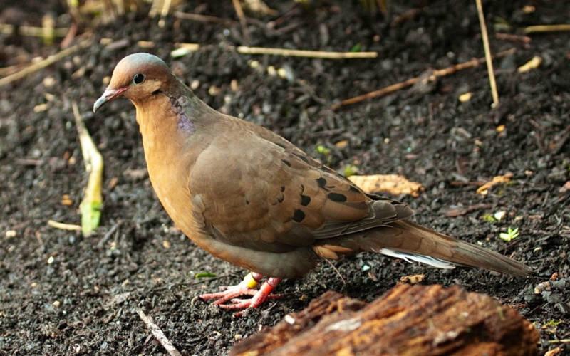 aviary-socorro-dove-3000-1875