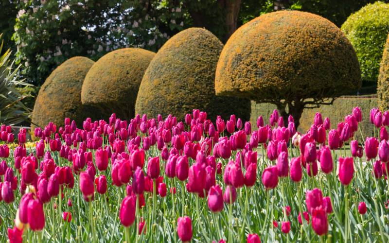 10 fun facts about the gardens