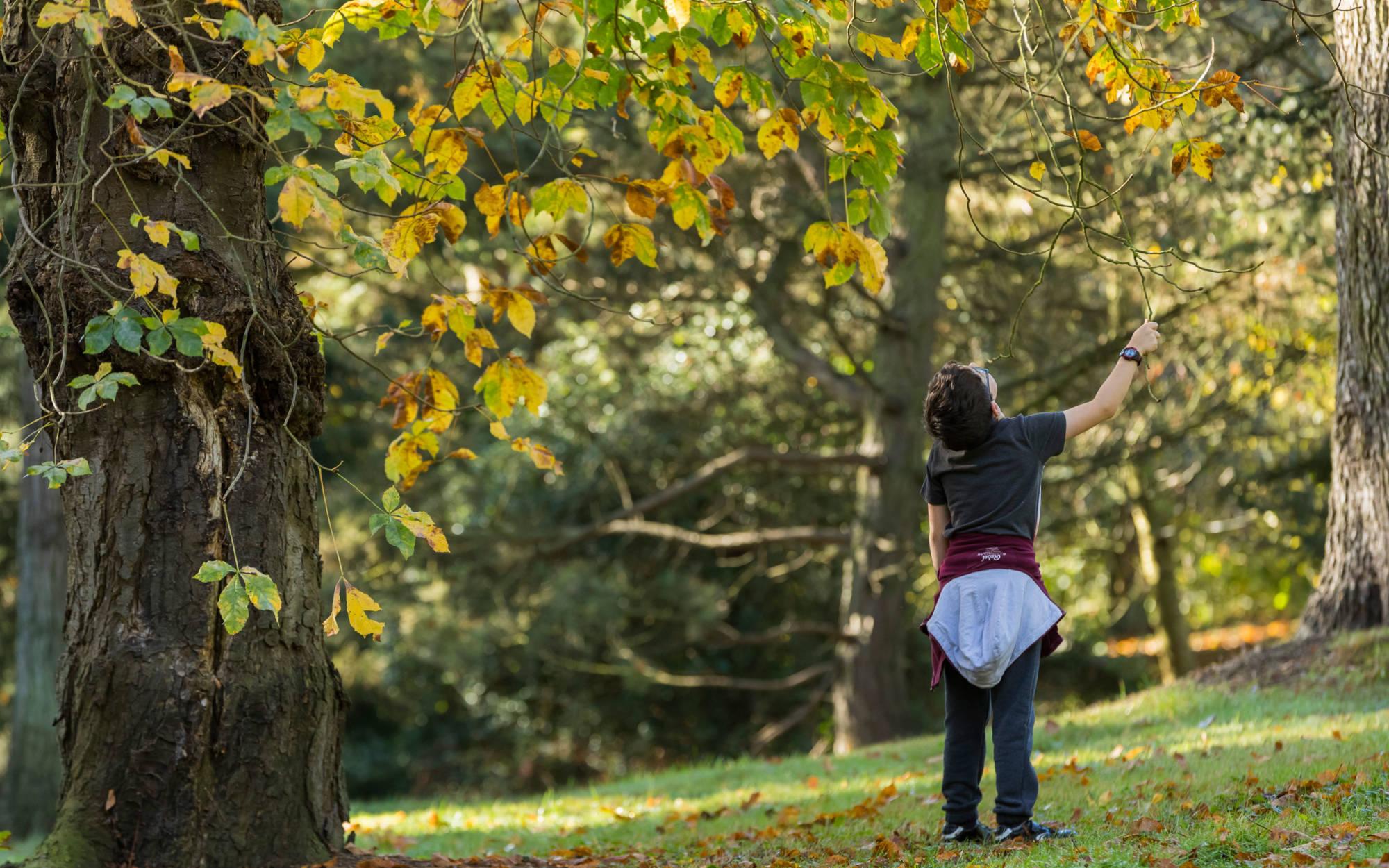 Boy exploring nature at Waddesdon