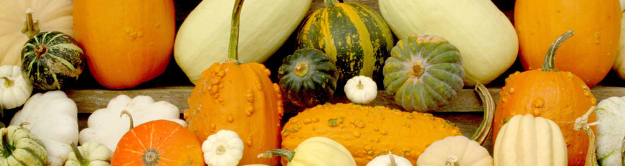 Eythrope gourds