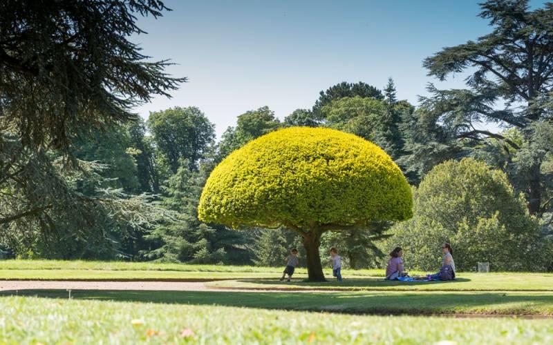 Mushroom-tree-1000-625-chris-lacey