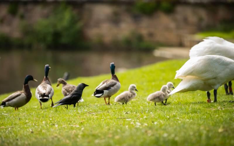 Water garden wildlife