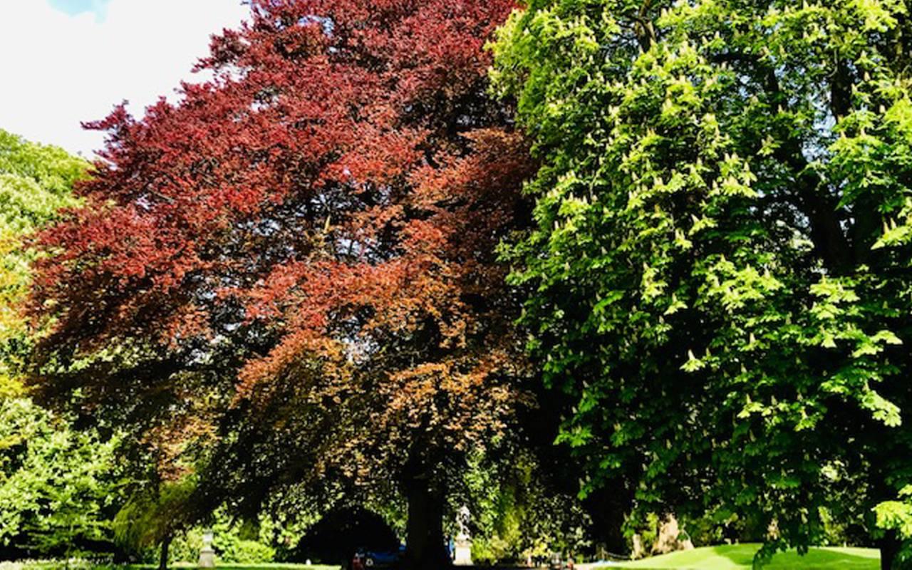 Colourful trees