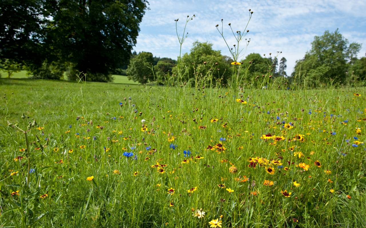 Wildflowers at Waddesdon