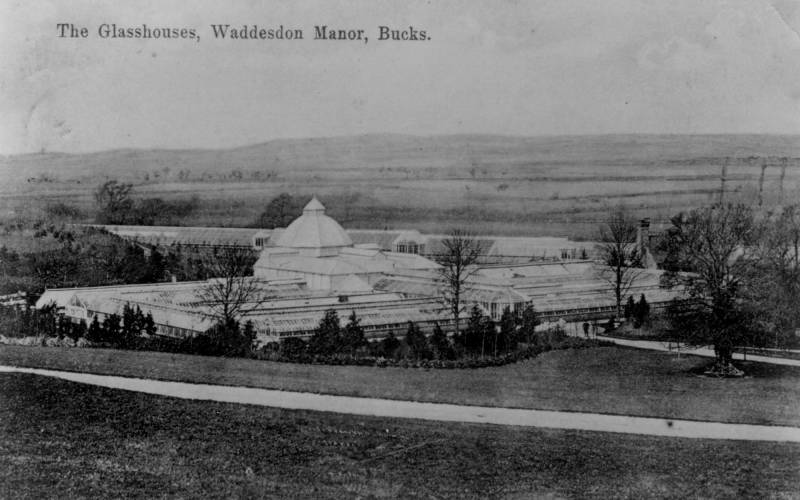 Waddesdon's lost glasshouses