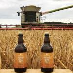Waddesdon's very own ale: specially crafted Shepherd's Gold