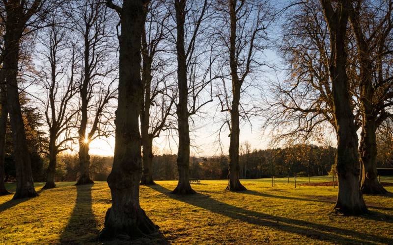 Winter-trees-sunlight-gardens-chris-lacey-1000-625