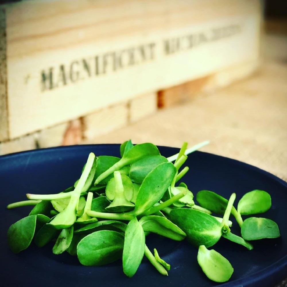 magnificent microgreens produce