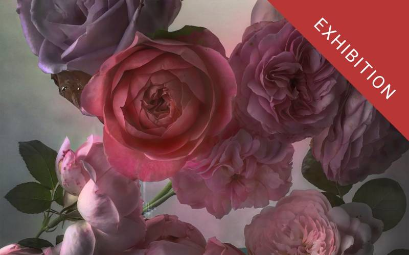Roses-from-my-Garden-Nick-Knight-Sunday-6th-September-2015-web-graphic-with-exhibition-flash