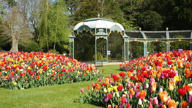 Spring tulips Aviary Garden