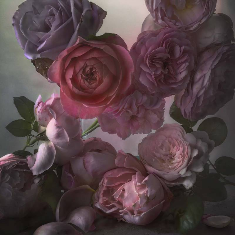 Photograph of roses by Nick Knight