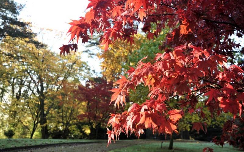 Gardens-in-Autumn-©-National-Trust-Waddesdon-Manor-Derek-Pelling